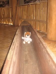 tiger in dugout canoe - Andrew Gossen