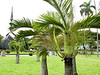 2-28 Memorial Peace Park, palm trees