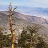 Pine slopes