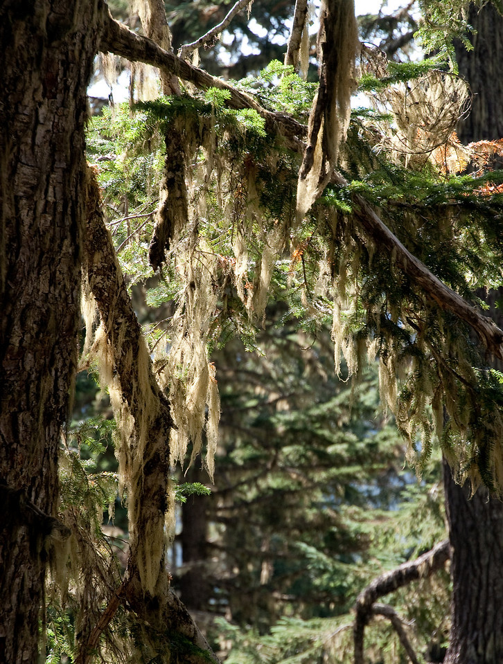 Lichens were everywhere.
