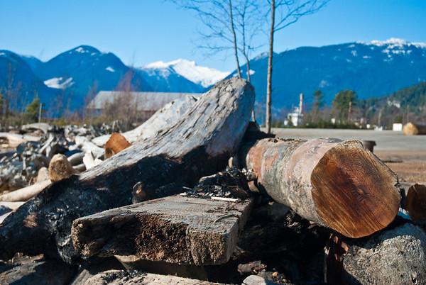 Some wooden logs along the side of the road, where we stopped, to take pictures with the mountains in the background