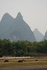A few local carabou feed in a field across the Li River, with massive Karst towers looming overhead.