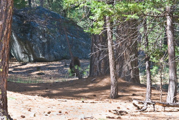 We saw a bear as we started the trail head. He kept running away from my camera though :(