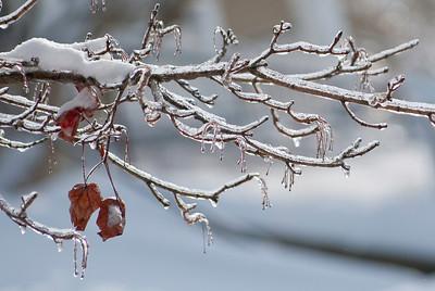2009.1.28 - Ice Storm-5
