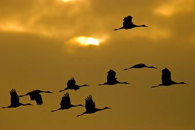 2009_1114_Cranes
