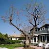 TreePan