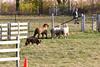 11-08-sheep-0620