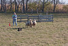 11-07-sheep-014-9735