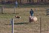 11-07-sheep-005-9723