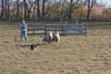 11-07-sheep-015-9736