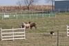 11-07-sheep-006-9724