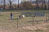 11-07-sheep-004-9722