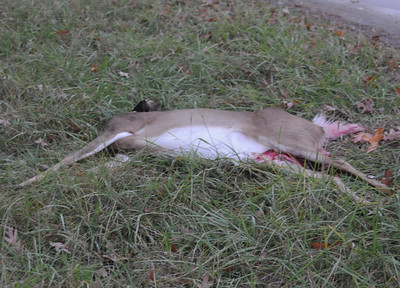11/9/2009 Two Roll Overs with Deer in Ridge First Due