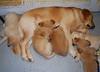 9211 Slammer Pups Feb 9 2009
