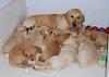 9237 Slammer Pups Feb 11 2009 crop