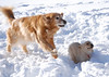 9157 Sasha Sandi Feb 8 2009