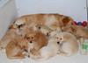 9235 Slammer Pups Feb 11 2009