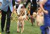 20090808132457 Junior Puppy Class