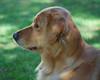 DSC_3791 Shayla Sept 5 2009
