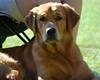 DSC_3777 Sammy Sept 5 2009