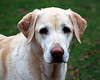 DSC_5226 Bailey Nov 1 2009