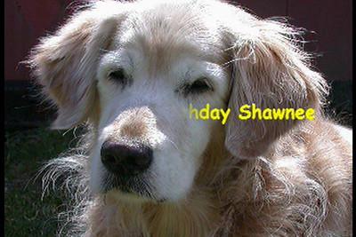 Shawnee's 14th Birthday Tribute