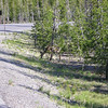 Deer at entrance to Crater Lake National Park