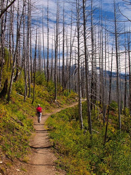 Highline Trail Glacier National Park Montana