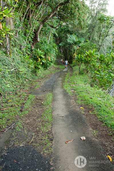 On the Trail to the Hawaii Tropical Botanical Garden
