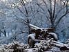 Hargrave-Snow-3