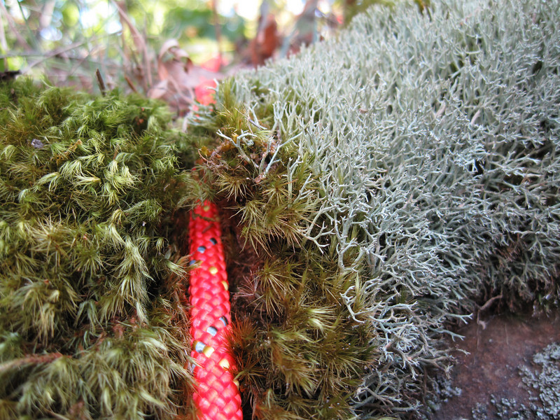 I don't know any details about this cool plant life, but the darker stuff on the left that my rope is embedded in is nice and soft, whereas the stuff on the right is hard and prickly. Neat stuff! I was fascinated by it's appearance. I wish my camera would have focused at an even closer range.