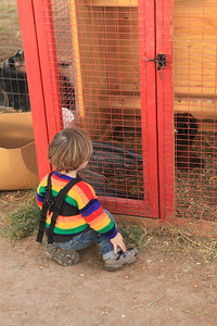 Luke didn't neglect any of the animals -- here he is giving the chickens some company!