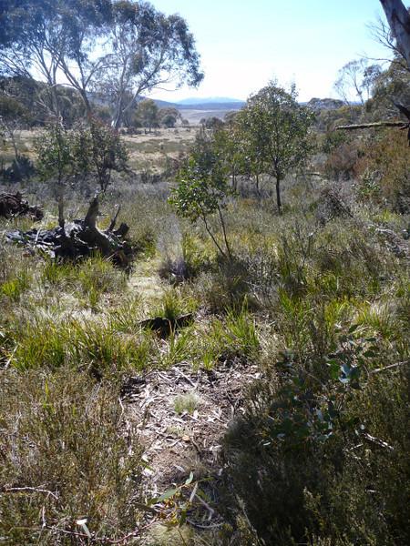 Rogaine course setting, Tantangara Dam area, NSW, 11/9/10<br /> Team Dan Clark, Matilda and Cam, western edge of course