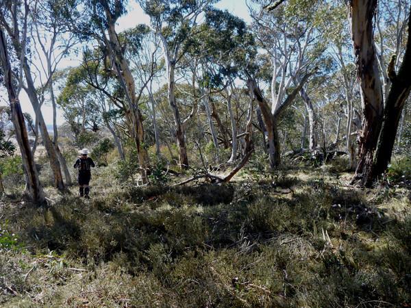 Rogaine course setting, Tantangara Dam area, NSW, 11/9/10<br /> Team Dan Clark, Matilda and Cam, western edge of course<br /> Dan
