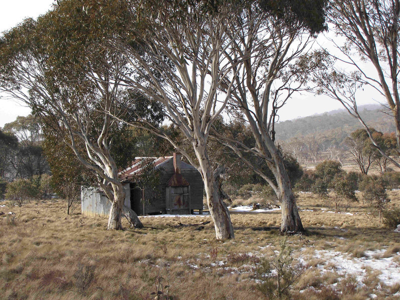 Rogaine course setting in the snow, Tantangara Dam area, NSW, 21/8/10<br /> Gavells Hut, near Nungar Plain