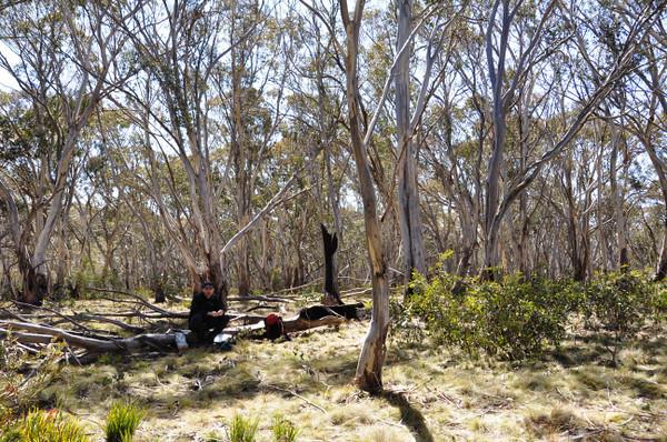 Rogaine course setting, Tantangara Dam area, NSW, 11/9/10<br /> John, lunch spot