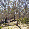 Rogaine course setting, Tantangara Dam area, NSW, 11/9/10<br /> John, lunch spot