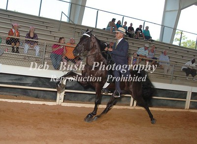 CLASS 12  AMATEUR 50  AND OVER SPECIALTY