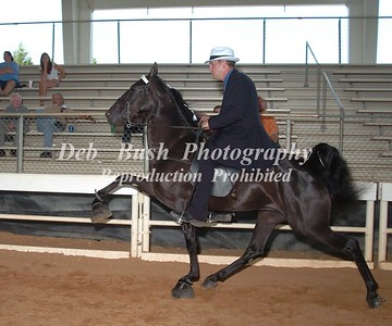 CLASS 8  THREE YR OLD RIDERS CUP