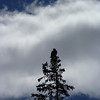 The bald eagle that kept watch around the bay.