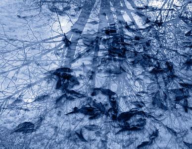 201011d  0248 blue sRGB