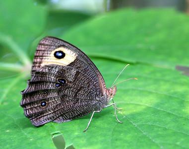 Butterfly @ Glacier Ridge MP - July 2010