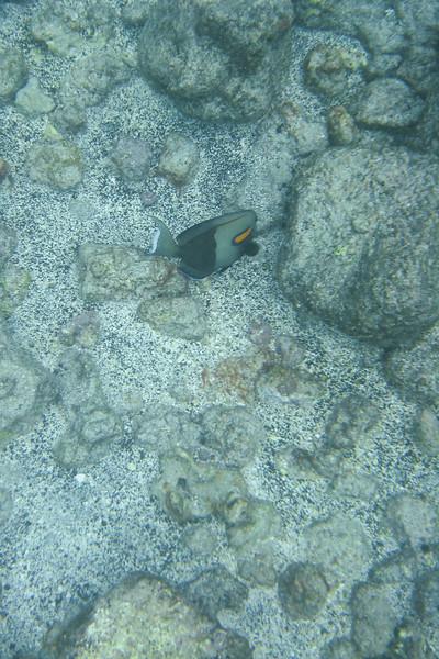 not yellow fish