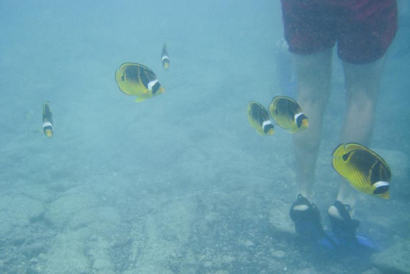 again the yellow fish