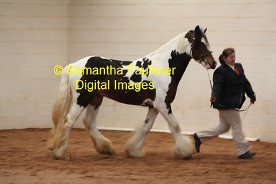 2010 Horse Shows