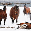 2010 Horses : 35 galleries with 947 photos