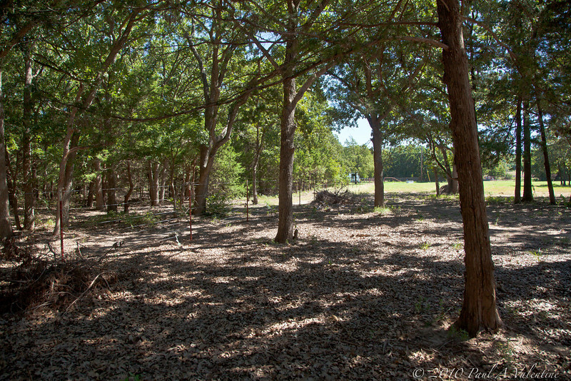 The wooded part of their West property.