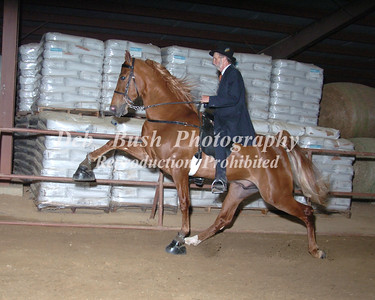 CLASS 17  FOUR YR OLDS OPEN SPECIALTY