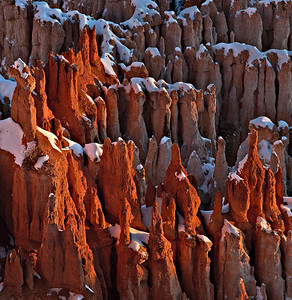 Hoodoos - sunrise light Bryce Canyon, Utah