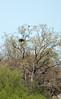 04-19-2010 bald eagle_0001 as Smart Object-1